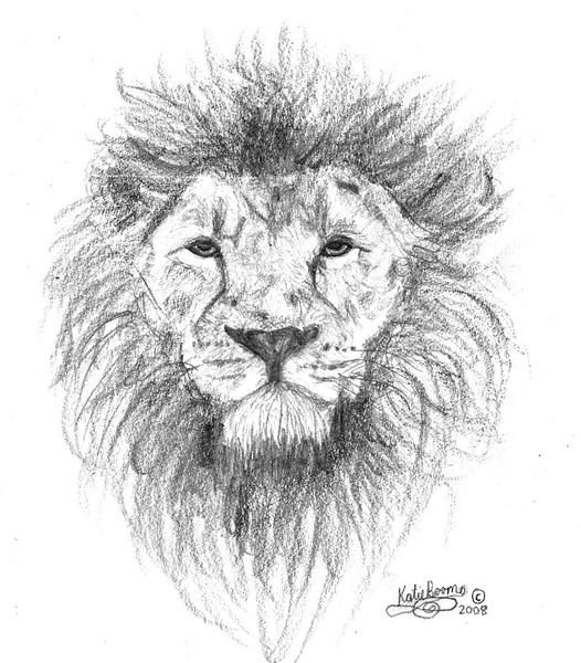 Cool Lion Drawings